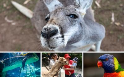15 Best Zoos in Australia